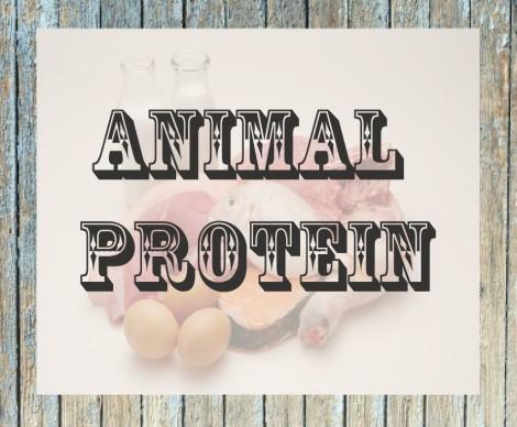 Riscos de uma dieta alta em proteína animal