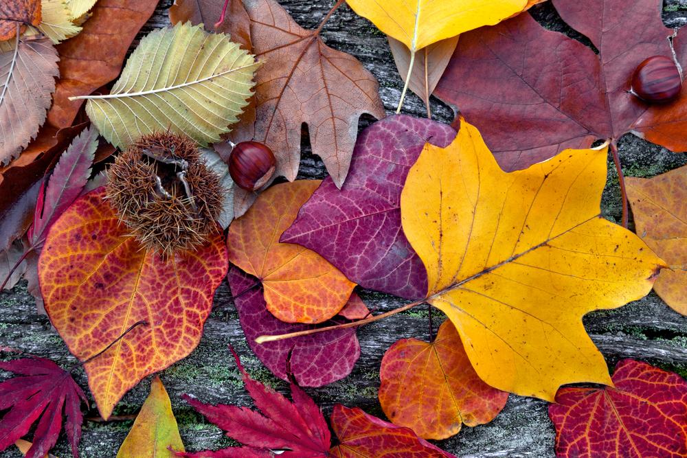 O estilo de vida que deves ter no outono de modo a estares forte e saudável