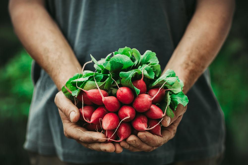 Os 12 alimentos que deves sempre consumir biológicos