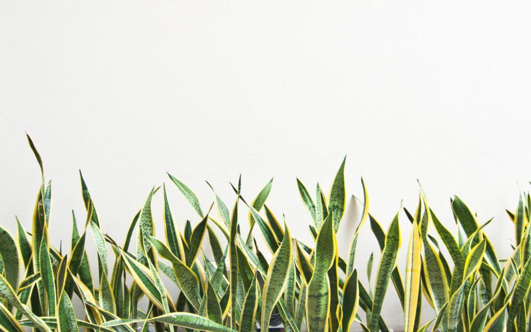 4 plantas que deves ter sempre em casa