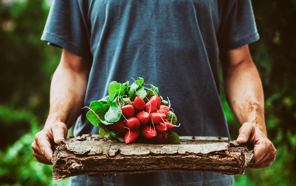 3 benefícios de teres uma horta em tua casa